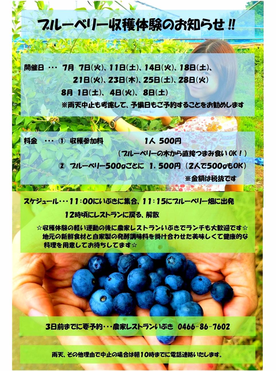 ブルーベリー3.jpg